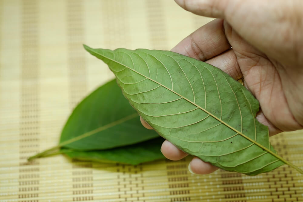 Everything White Vein Kratom Has to Offer You